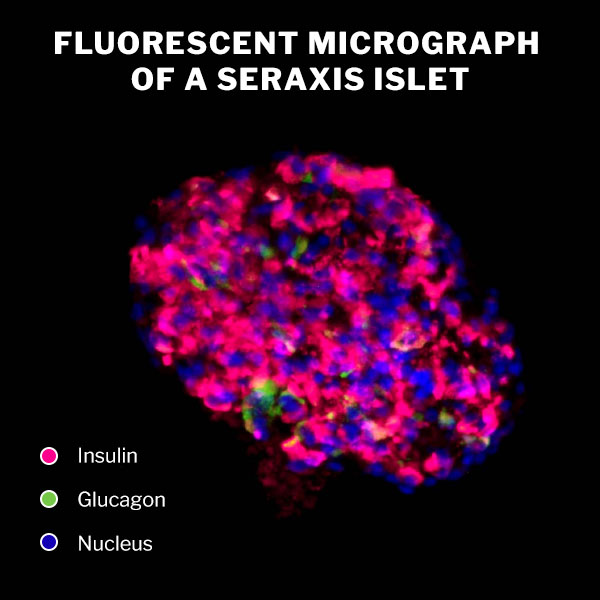 Seraxis produced islet